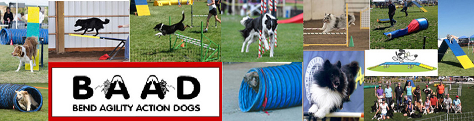 Bend Agility Action Dogs